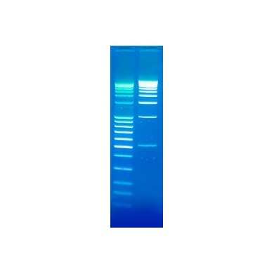 DNA Stain Clear G, SERVA