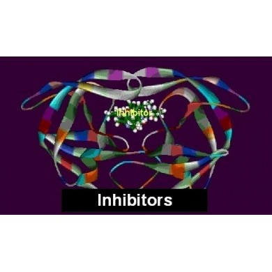 Trypsin inhibitor from soybean 1% solution, min. 13 000 U/mg, CAS [9035-81-8], Serva
